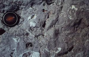 1976.05.12 Galagonone jurassique fossilifère